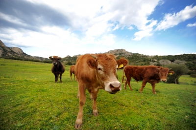 Making Livestock Farming More Sustainable One Billion Hungry Can We Feed The World