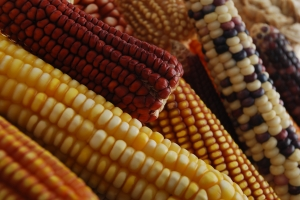 Photo credit Xochiquetzal Fonseca CIMMYT.