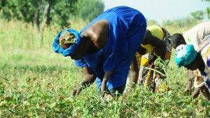 Farmers in Cinzana village, Mali. Photo by: P. Casier / CGIAR / CC BY-NC-SA