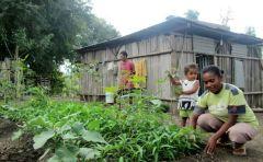 Home garden, Indonesia.