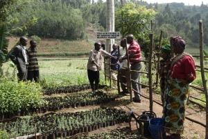 Agroforestry group in Tanzania. Photo credit: P.Kimeli/CCAFS