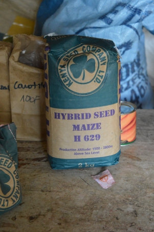 This Kenya Seed Company hybrid maize was one of the seed varieties Odette bought from OAF, 60% on credit.