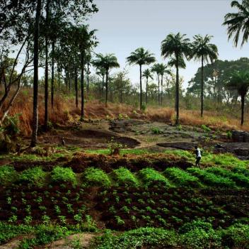 landscape credit ifpri